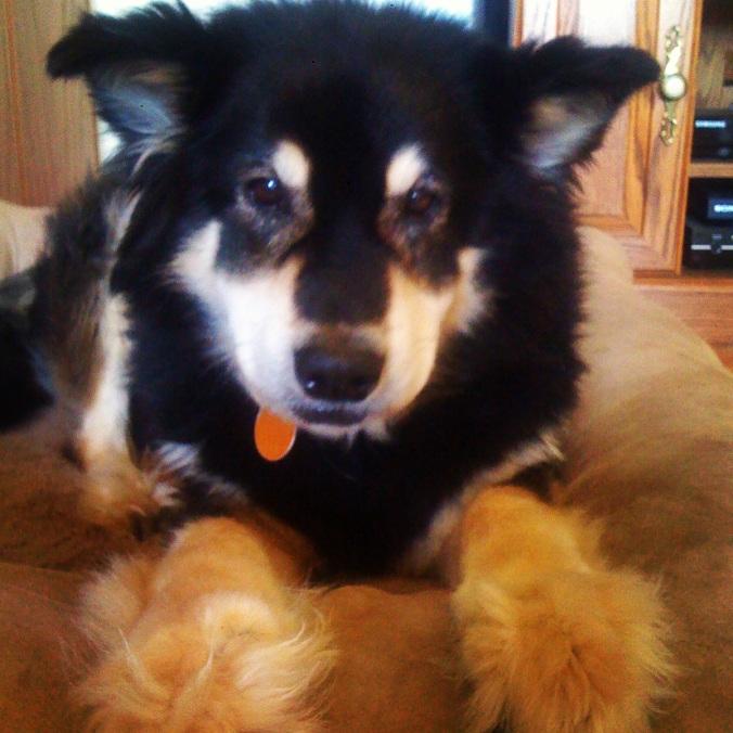 Our dog Bear