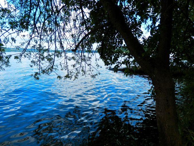View from the Park - Lake Washington